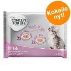 Concept for Life Kitten -kokeilupakkaus  4 x 85 g