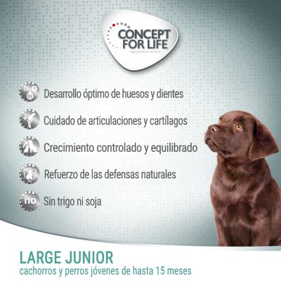 Concept for Life Large Junior