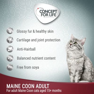 Concept for Life Maine Coon Adult - in Ragout