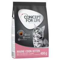 Concept for Life Maine Coon Kitten
