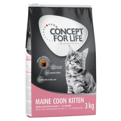 Concept for Life Maine Coon Kitten pour chaton