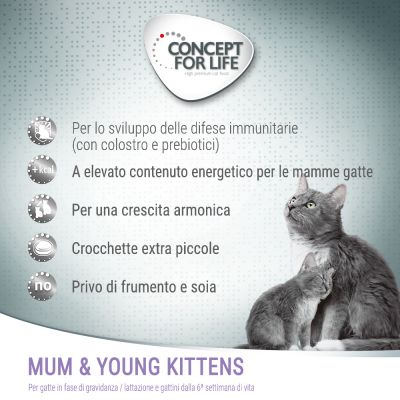 Concept for Life Mum & Young Kittens
