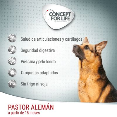 Concept for Life Pastor alemán Adult