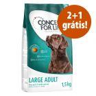 Concept for Life ração para cães  3 x 1,5 kg  em promoção: 2 + 1 grátis!