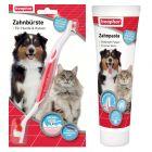 Conjunto de limpeza dentária beaphar para cães e gatos