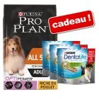 Croquettes PURINA PRO PLAN 14 kg + friandises Dentalife 3 x 345 g offertes !