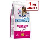 Croquettes Forza10 14 kg + 1 kg offert !
