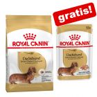 Croquettes Royal Canin Breed + sachets offerts !