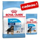 Croquettes Royal Canin Puppy 8 à 15 kg + nourriture humide offerte !