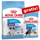 Croquettes Royal Canin Size + nourriture humide offerte !