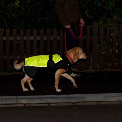 Dog Coat Illume Nite Neon