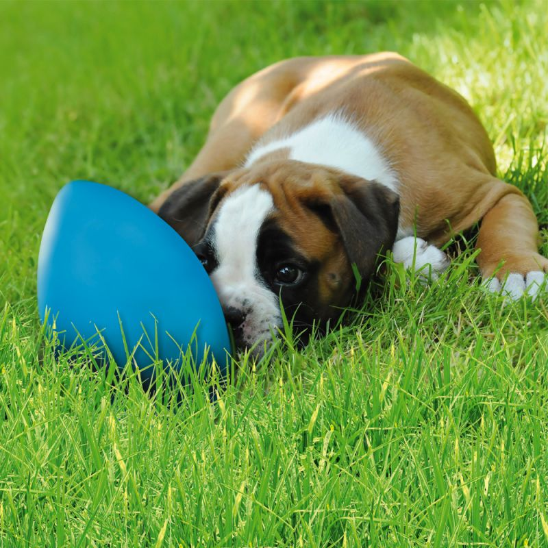 Dog Toy RunningEgg