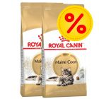 Dubbelpack Royal Canin Maine Coon Adult