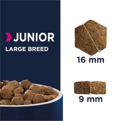 Eukanuba Developing Junior Large e Giant Breed frango