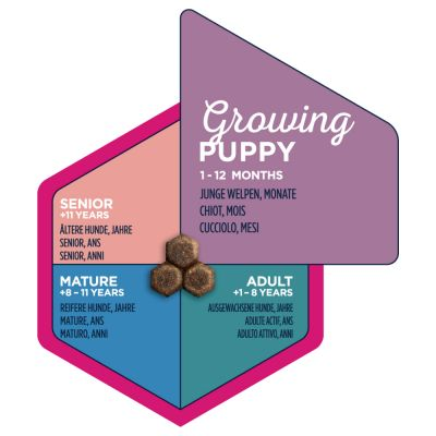Eukanuba Growing Puppy Small Breed poulet pour chiot