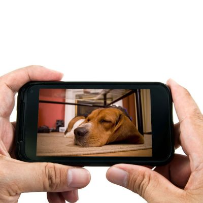 EYENIMAL PET VISION LIVE FULL HD-camera