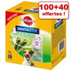Friandises Pedigree Dentastix Daily Fresh 100 + 40 offertes !