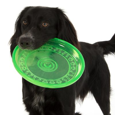 Frisbee in TPR