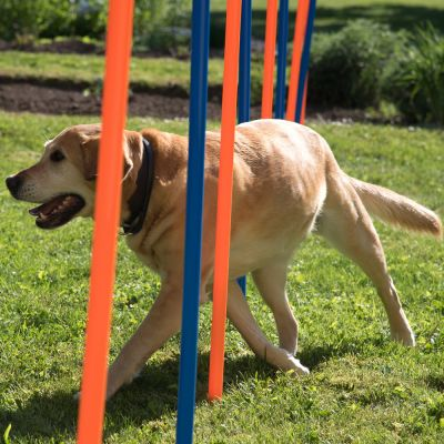 Fun & Sport Complete Dog Agility Course