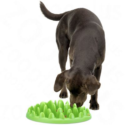 Gamelle anti-glouton NORTHMATE ® Green Feeder pour chien