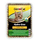 GimCat Hy-Gras, трева за котки 150 г