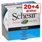 20 + 4 gratis! Schesir, karma mokra, 24 x 150 g