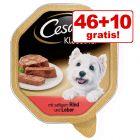 46 + 10 gratis! 56 x 150 g Cesar