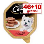46 + 10 gratis! 56 x 150 g Cesar Schale Hundefutter