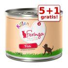 5 + 1 gratis! 6 x 200 g Feringa Kitten