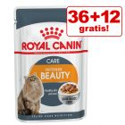 36 + 12 gratis! 48 x 85 g Royal Canin Kattenvoer