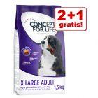 2 + 1 gratis! 3 x 1,5 kg Concept for Life X-Large Adult