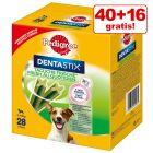 40 + 16 gratis! 56 x Pedigree Dentastix Fresh