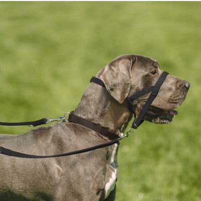 Halti Head Collar - Black