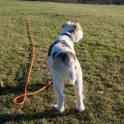 Heim Long Dog Training Lead - Orange