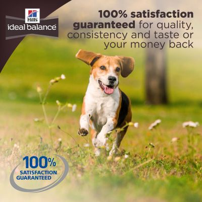 Hill's Ideal Balance Canine Adult No Grain - Chicken & Potato