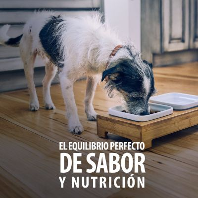 Hill's Mature 7+ Healthy Cuisine Science Plan estofado para perros