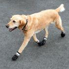 Hundesko S & P Boots
