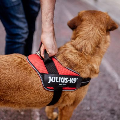 JULIUS-K9 IDC® Powair Harness - Orange