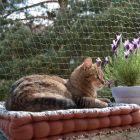 Katzenschutznetz mit Drahtverstärkung