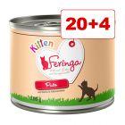 20 + 4 kaupan päälle! Feringa Menu Kitten 24 x 200 g