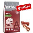 14 kg Briantos karma dla psa +  Lukullus kości do gryzienia, z kaczką, 2 x 10 cm gratis!