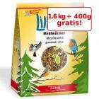 1,6 kg + 400 g gratis Lillebro Viermi de făină uscați