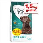 12 + 1,5 kg gratis! Concept for Life hundefôr i bonuspakke