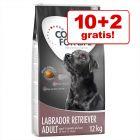 10 + 2 kg gratis! 12 kg Concept for Life hrană uscată