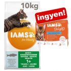 10 kg IAMS for Vitality + 12 x 85 g IAMS Delights aszpikban ingyen!