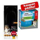 14 kg PURINA PRO PLAN koiranruokaa + Dentalife Snacks kaupan päälle!