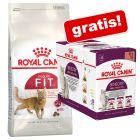 10 kg Royal Canin torrfoder+ 12 x 85 g Sensory i sås på köpet