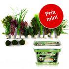 Kit : Plantes Zooplants