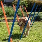 Kit slalom Agility pour chien Fun & Sport