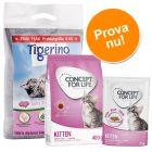 Kitten startpaket: testa Concept for life foder och Tigerino kattsand